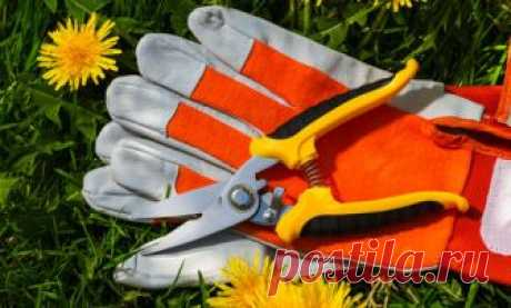 Como escoger correctamente las tijeras de podar al horticultor-novato