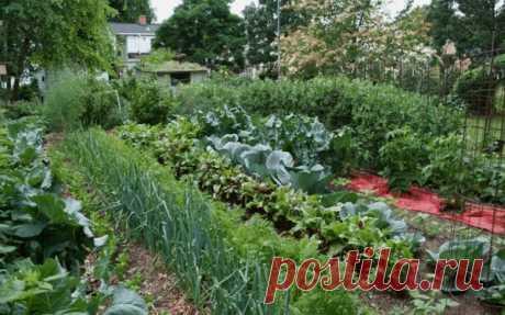 5 пар растений, которые рядом лучше не выращивать - останетесь без урожая 👇 | delanadache.ru🌷 | Яндекс Дзен