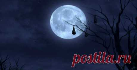 Scientists checked the myth about influence of a full moon on behavior of person \/ News \/ my Planet