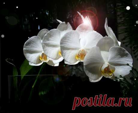 Закрытая система для орхидей. 3 причины неудачной пересадки.