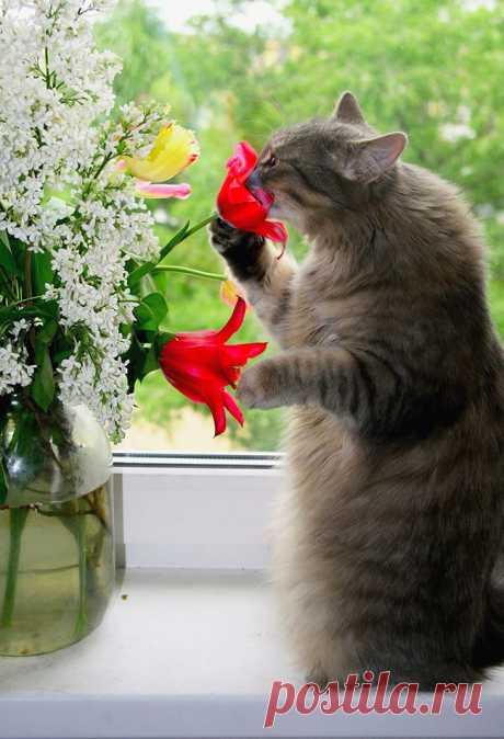Талантливые и многогранные коты))) Можно улыбаться бесконечно))