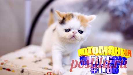 Любите смотреть видео про смешных котов? Тогда мы уверены, Вам понравится наше видео 😍. Также на котомании Вас ждут: видео кот,видео кота,видео коте,видео котов,видео кошек,видео кошка,видео кошки,видео о котах, видео приколы, видео смешные котиков, говорящие коты, коты 2020, кошек смешные, кошку, приколы про, про кошек смешное до слез, с кошками, смешное, смешные животные бесплатно, смешные кошки видео до слез