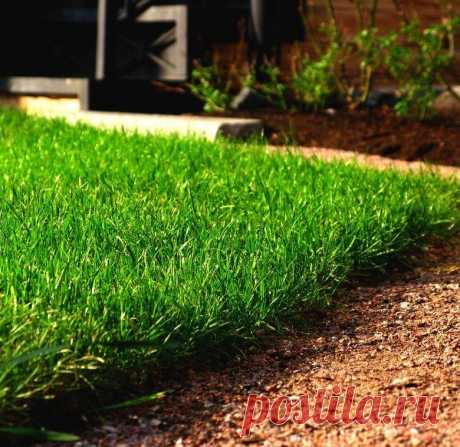 Интересный простой способ для озеленения лужайки или мини-газона » Женский Мир