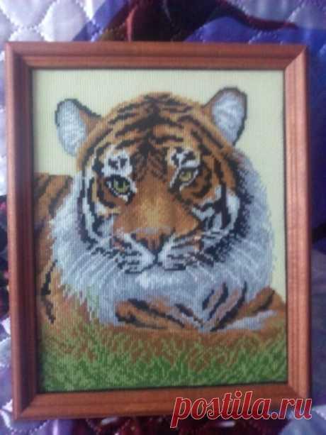 Этап процесса вышивки «Тигр» - Вышивка крестом