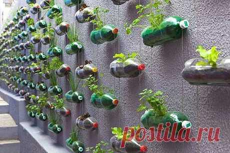 Пример вертикальных садов для дачи