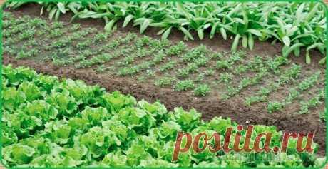 Сроки посадки овощей на рассаду