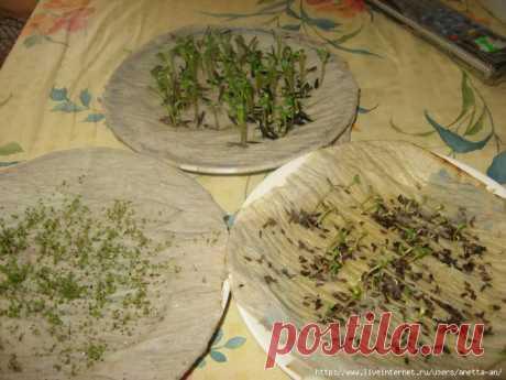 El modo simplísimo proraschivaniya de las semillas preciosas.