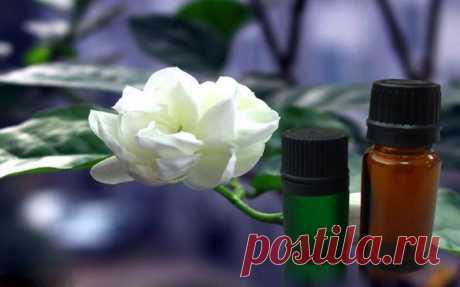 О полезных свойствах эфирного масла жасмина