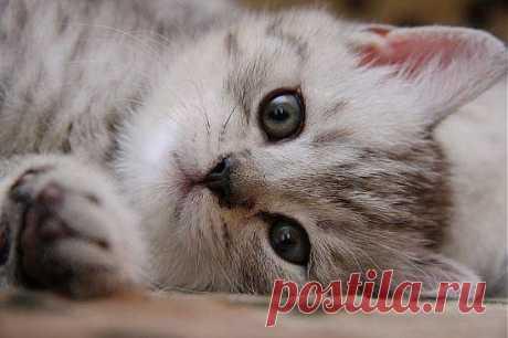 еще один котик ))