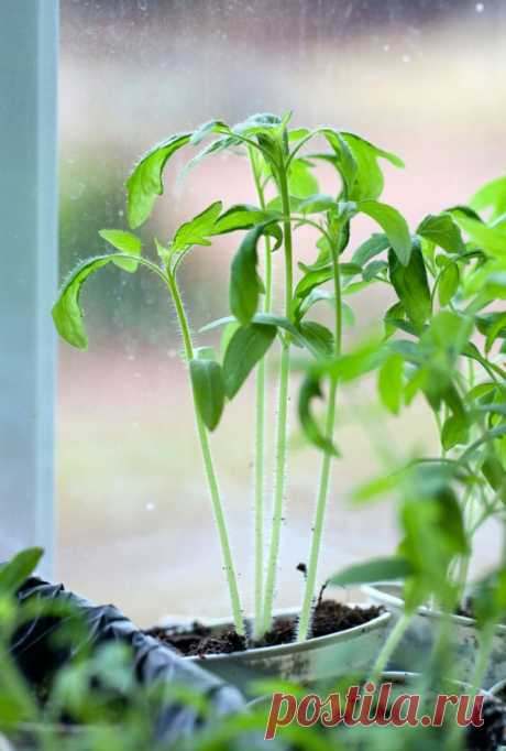 The main problems at cultivation of seedling and their decision