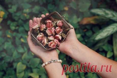 Женщины слишком долго помнят неподаренные розы.  Вера Камша