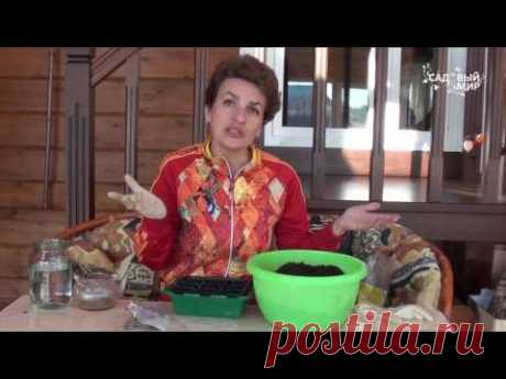 """(4) Рассада томатов без пикировки. Сайт """"Садовый мир"""" - YouTube"""