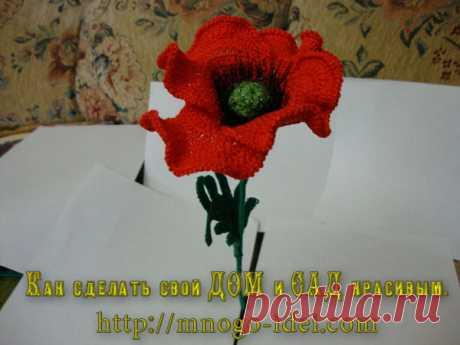 Цветы | Записи в рубрике Цветы | Дневник irinadas