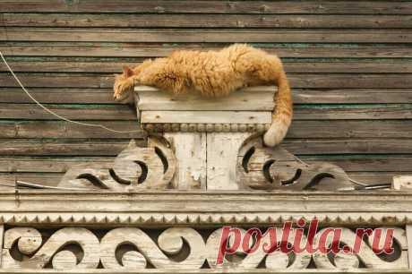 Рыжие-рыжие котики