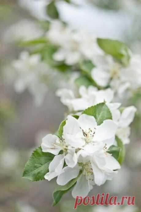 Весна всегда дарит предвкушение перемен...
