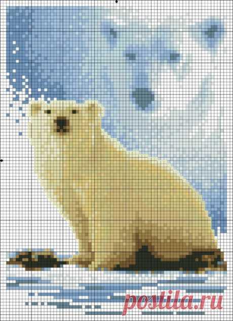 (9) Gallery.ru / Фото #2 - urso branco - denise10