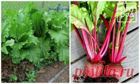 7 пар растений, которые нельзя выращивать рядом | Все о грядках (Огород.ru)