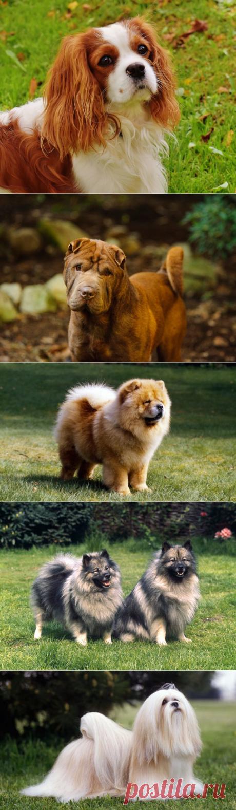 7 пород собак, с которыми не нужно долго гулять | PetTips