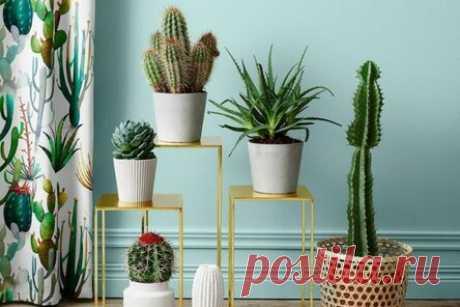 Домашние кактусы (95 фото): виды, особенности ухода