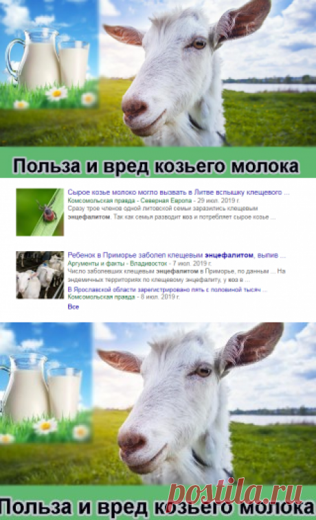 Польза и вред козьего молока - мифы и научные факты