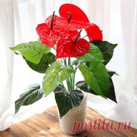 10 комнатных растений для семейного счастья