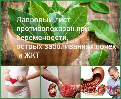 Лавровый лист для похудения: отзывы худеющих, польза, как правильно пить, рецепты