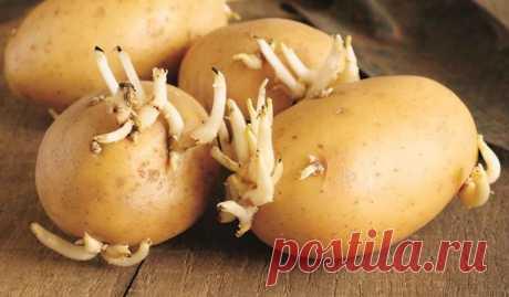 Р. Ахмедов: белые картофельные ростки лечат рак, ревматизм, подагру и повышают остроту зрения Не ошибусь, если скажу, что существует несколько сотен рецептов применения картофеля для лечения самых различных заболеваний. И мне трудно сделать выбор, чтобы не уподобиться заезженной пластинке. Меня волнует проблема онкологии и я, даже если повторюсь, напомню...