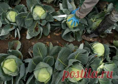 Россия против ГМО: Натуральная продукция – наше преимущество на мировом рынке   Вперёд, РОССИЯ! Новостной патриотический сайт