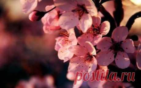 Самые красивые цветы в мире Цветы – символ красоты, радости девушек, эталон приятного аромата. Речь идет о самых приятных представителях растительного мира, который стали символом многих праздников. При этом в мире существует ко...