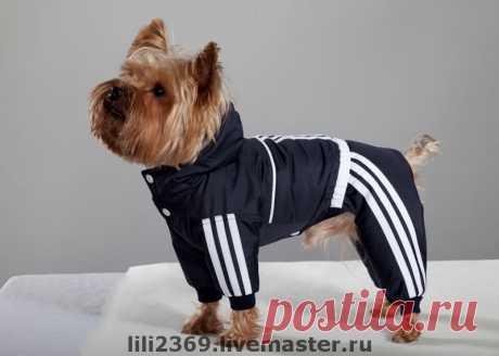 одежда для собак– Google Поиск