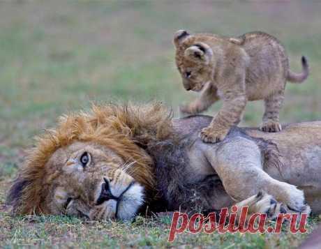Животным-матерям тоже бывает трудно! Забавные фото уставших матерей. | Клуб лучших мам! | Яндекс Дзен