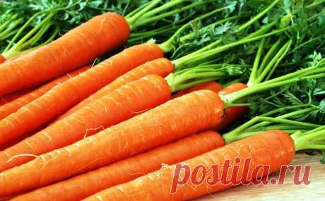 Прореживать морковь не нужно!