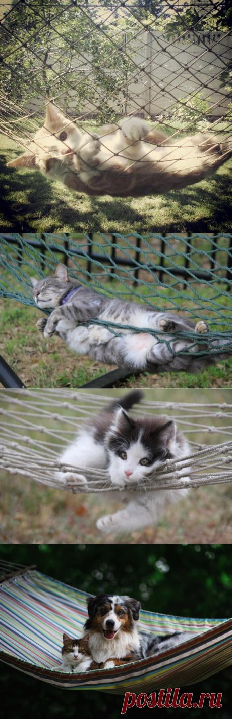 Гамак - для кота