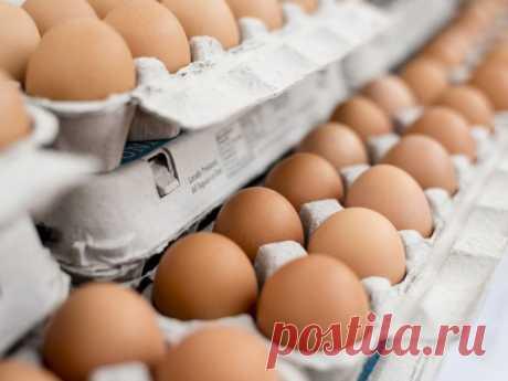 Врач из Германии рассказал, сколько можно есть яиц в неделю | ЗОЖ | MedikForum.ru