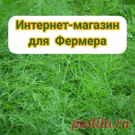 Как открыть интернет-магазин для фермера или ЛПХ дешево.   Бизнес из Будущего   Яндекс Дзен