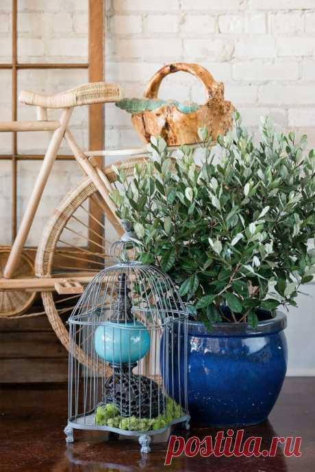 Фейхоа — универсальное кадочное, великолепное весь год Растения, способные в комнатах или оранжереях приносить полезные или просто яркие плоды, всегда считались особыми звездами. У цитрусовых, кофе, авокадо есть нестандартный и по выращиванию, и по своей …