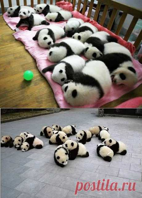 El pando-jardín infantil