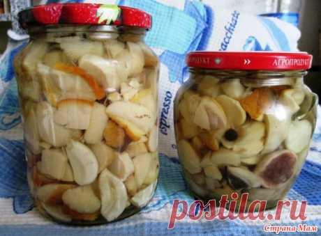 The most tasty recipe of pickling of mushrooms!