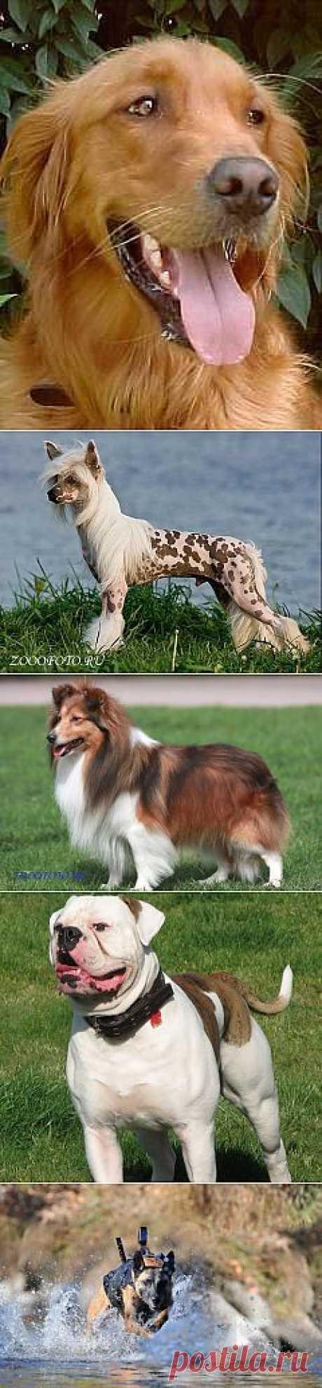 Фото животных - ЗооФото - Собаки