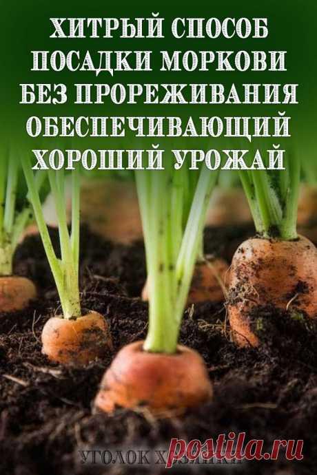 Сочная морковь, быстрые всходы, отсутствие необходимости прореживать грядки — все это становится реальным, если посеять семена не привычным методом, а с использованием клейстера.