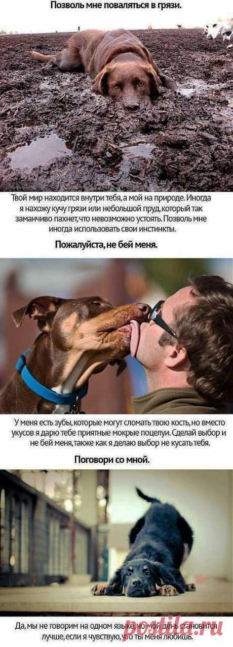 Трогательный пост: Собачьи просьбы... .