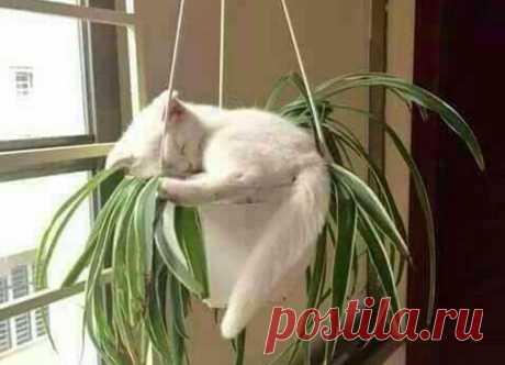 ТОП-15 доказательств того, что кошки могут уснуть в самых неожиданных (и не самых удобных) местах — блог туриста Dasha1553 на Туристер.Ру