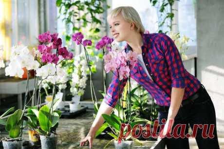 Не дикая орхидея: как ухаживать за самым капризным цветком . Милая Я
