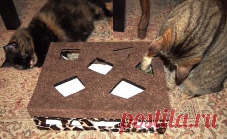 Классная игрушка для котиков из обувной коробки своими руками!