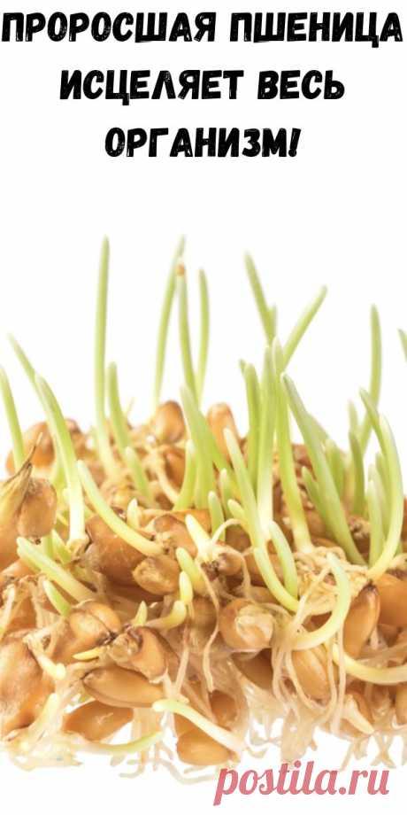 Проросшая пшеница исцеляет весь организм! - Полезные советы красоты