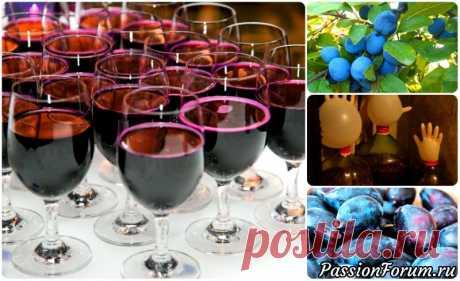 Домашнее вино из слив - запись пользователя Наталья Василенко в сообществе Болталка в категории Кулинария На свете нет ничего лучше того, что сделано своими руками. Сегодня я хочу предложить вашему вниманию проверенный рецепт сливового вина в домашних условиях.