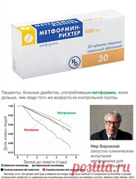 Лекарство от старости метформин продлевает жизнь