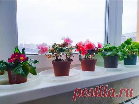 Сделал процедуру, которая улучшает внешний вид растений и оберегает их от возможных болезней   Антон - цветочник   Яндекс Дзен