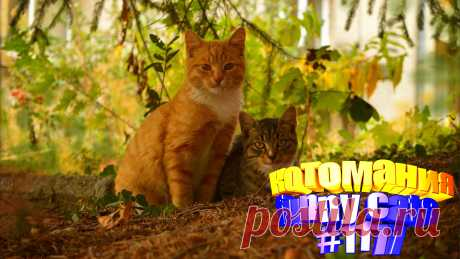 Любите смотреть приколы с котами? Тогда мы уверены, Вам понравится наше видео 😍. Также на котомании Вас ждут: видео кот,видео кота,видео коте,видео котов,видео кошек,видео кошка,видео кошки,видео о котах, видео прикол, видео смешное о кошках, кот видео, котов, кошка, прикол видео кошек, приколы котов, про кошек, с кошками, смешное про котов, смешные видео про животных, смешные котята