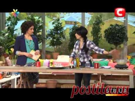 Антицеллюлитные масла: рецепты составов в домашних условиях, массажи, обертывания от целлюлита